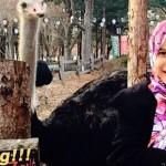 17- Gambar Percutian Memey Suhaiza Dan Norman Hakim Ke Korea Selatan - ROTIKAYA
